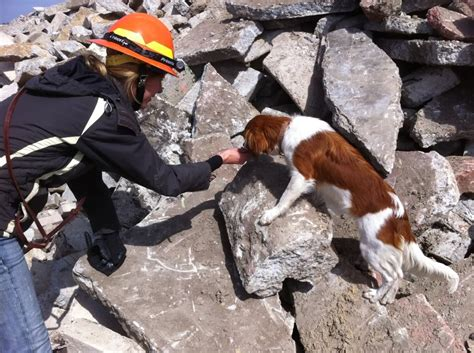 puppy finder rescue facts about search and rescue dogs you ll want to page 13 of 17 dailyforest