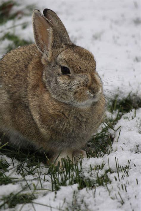 tiere im winterwald lingo das mit mach web - überwachungskamera Für Tiere