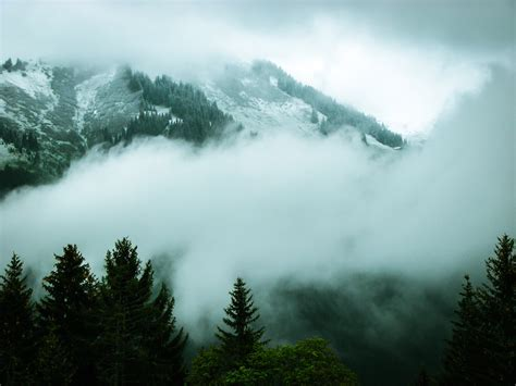 bitcoin fog tutorial mountain landscape with forest and clouds and fog in new