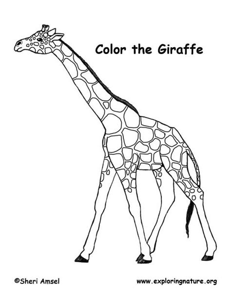 coloring pages giraffe giraffe coloring page