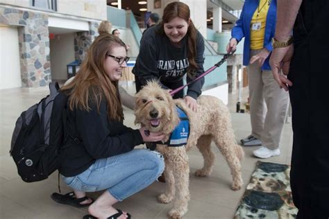 therapy michigan west michigan therapy dogs counseling center grand valley state