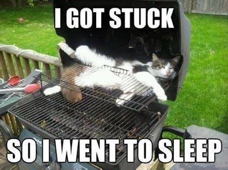 Pet Memes - keepin babel at bay funny pet memes