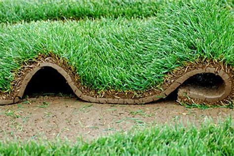tappeto erboso posa tappeti erbosi a brescia e provincia vivaio santigaro