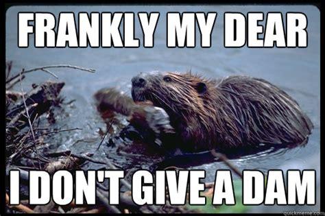 Beaver Meme - uncaring beaver memes quickmeme
