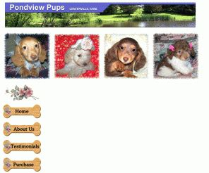 miniature dachshund puppies for sale in iowa pondviewpups miniature dachshund puppies for sale iowa mini dachshunds breeders