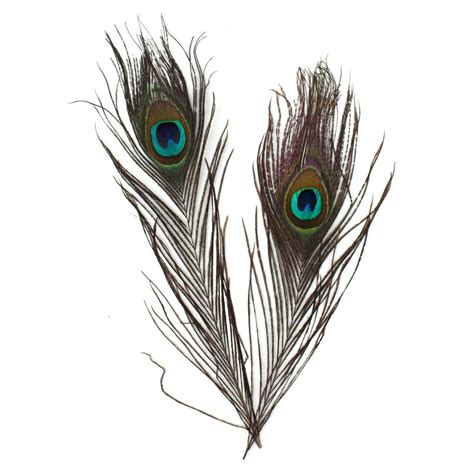 peacock feathers 4 pack hobbycraft