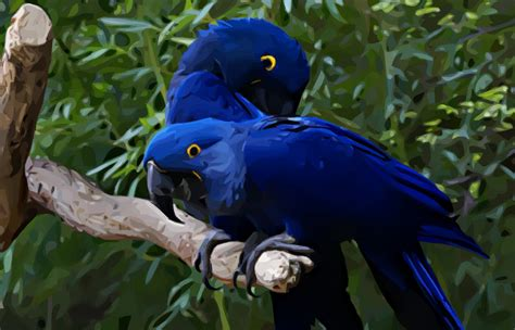 love birds wallpapers beautiful birds pictures cini clips