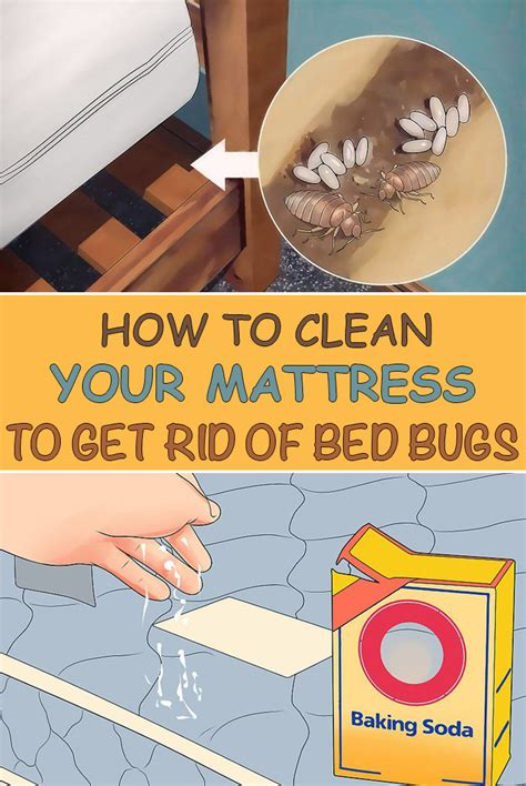How To Get Rid Of Bed Bugs In A by How To Clean Your Mattress To Get Rid Of Bed Bugs Simple