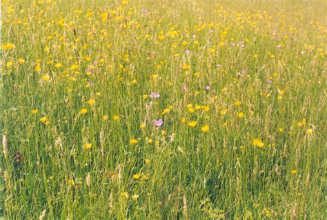 plants in the tropical grassland grassland biomes of the world