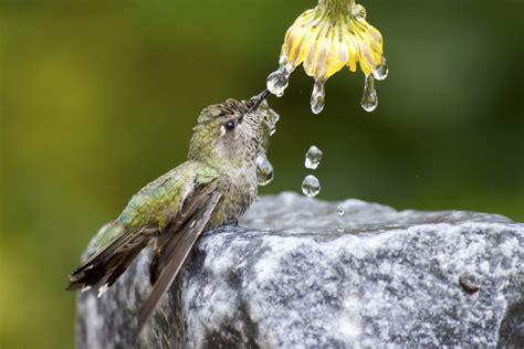 colibr fondos de pantalla 1920x1200 432 colibr 237 sobre una roca bebiendo el agua de una flor 75894
