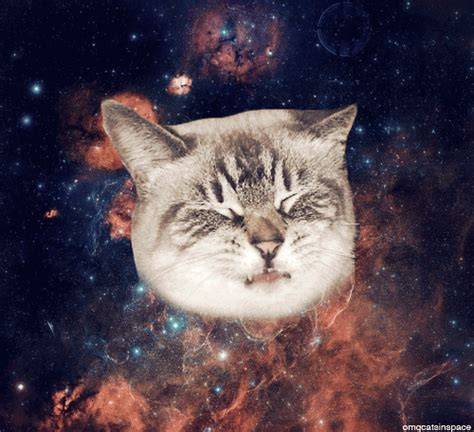 Cat In Space omg cats in space