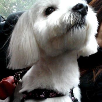 dog haircuts chicago howlistic grooming 46 photos 81 reviews pet groomers