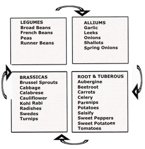 Homestead Roots Companion Planting Planting Schedules Vegetable Garden Rotation Chart