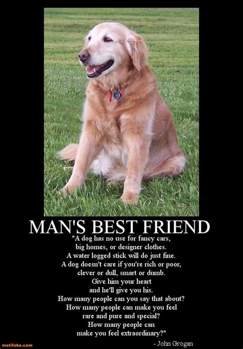 dogs are loyal a special tribute to the loyal dogs in our lives 15 pics bit rebels