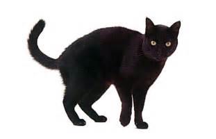 halloween black cats halloween black cat clip art clipart best