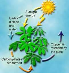 2 carbohydrates found in plants the barkista the omnivorous part 2 macro nutrient