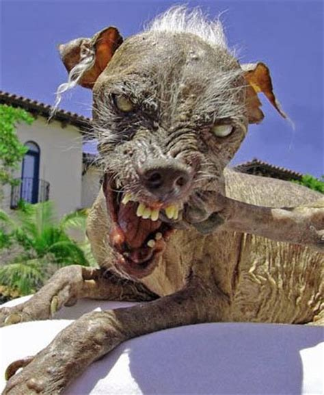 sams dogs the worlds ugliest dogs 2003 2004 2005 most sam breeds picture