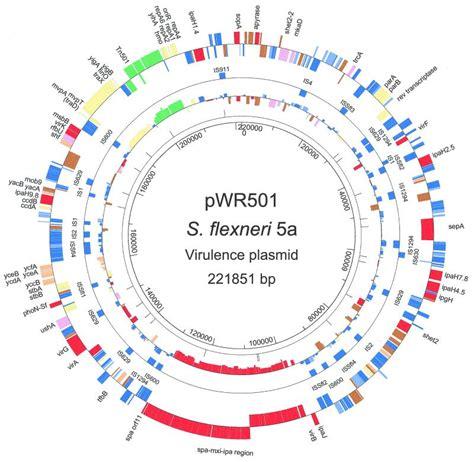 tikz pgf - Creating plasmid diagrams in TeX - TeX - LaTeX ... Y Chromosome