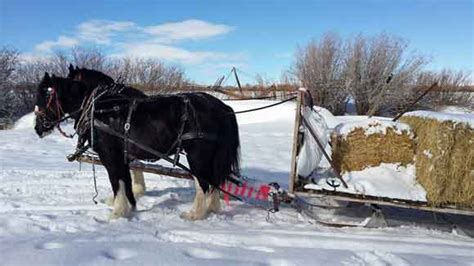 Rancher Logging rural heritage work horses in a market garden part 2 draft