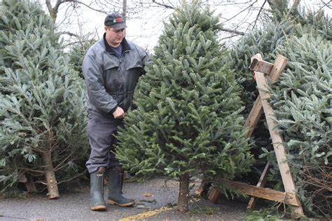 christmas tree sales chopped qnetnews ca