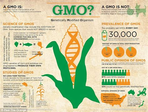 are gmos bad for your health if you re asking this question you re probably missing the point is gmo corn you sick how one discovered that the widely used ingredient caused