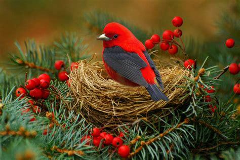 celebrating  natural christmas  creative feeling