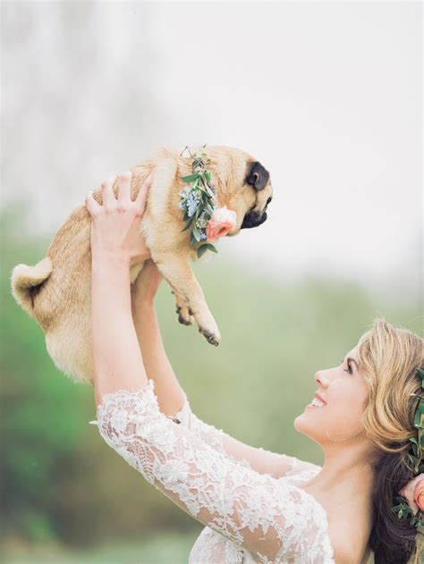 pug in wedding dress 25 best ideas about pug wedding on pug puppies baby pugs and baby