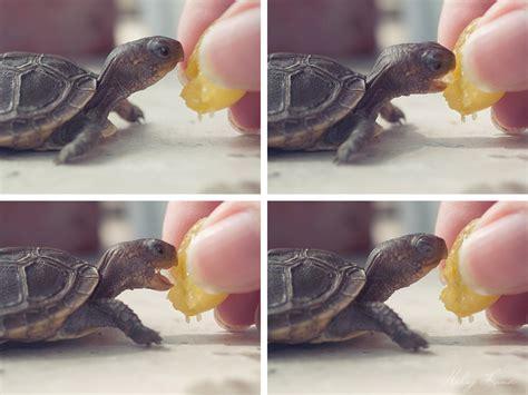 a tiny banana imgur happiest tiny turtle imgur