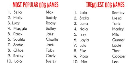 names for puppies talking dogs at for of a what s in a name