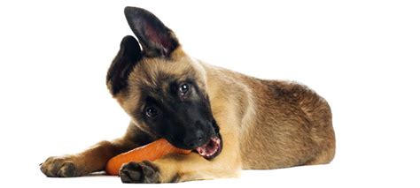 what veggies can dogs eat what vegetables can dogs eat the munch zone