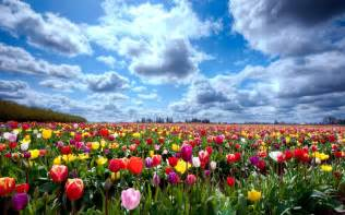 tulip fields tulip fields tulips field flower flowers wallpaper 2880x1800 428163 wallpaperup