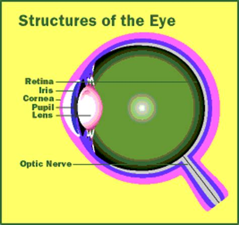 a substance that causes sensitivity to light eye check your symptoms and signs