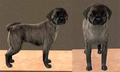 silver brindle pug mod the sims 4 pugs