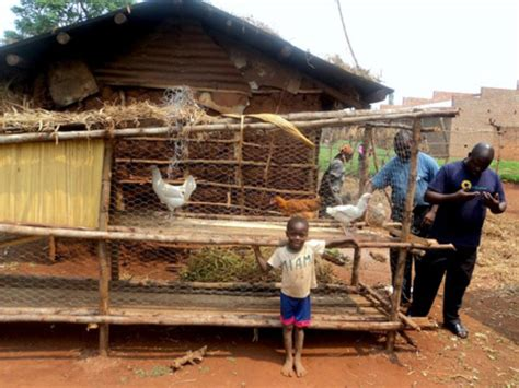 Chicken House Design And Construction In Kenya Announcing The Poultry Project S Perennial Chicken Coop