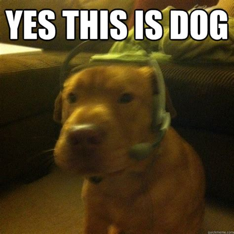 Accountant Dog Meme - yes this is dog i can do accounting yes this is dog