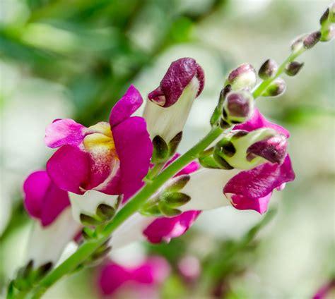 bocca di fiore fiori flowers mm srl