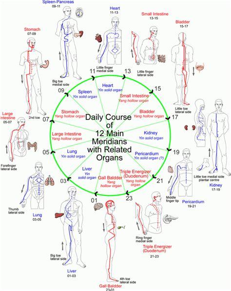 medicine meridians diagram the 12 meridians the family healing spot llc