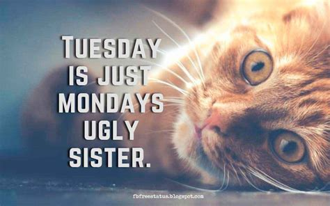 happy funny tuesday quotes  images pictures