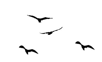 flying birds silhouette clipart library clip art library