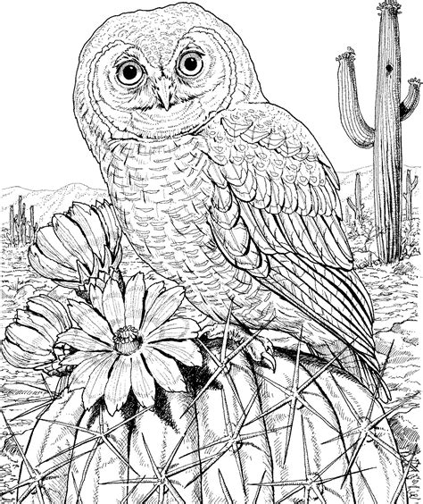 coloring page for adults owl 10 difficult owl coloring page for adults