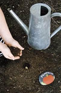 when to plant pumpkin seeds for planting pumpkin seeds raising arizona magazine