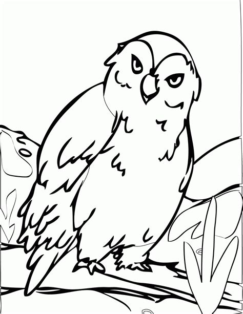 Free Printable Arctic Animals Coloring Pages Kids Coloring Animals Of The Arctic Coloring