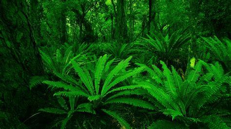 tropical forest fond decran hd arriere plan