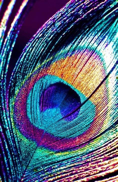 tattoo feather background iridescent rainbow peacock feather iridescent