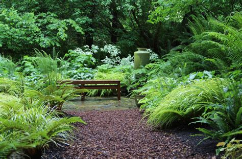 Fern Garden Ideas Bliss Garden Design Lytle Road Bainbridge Island Shaded Creek Contemporary Fern Garden