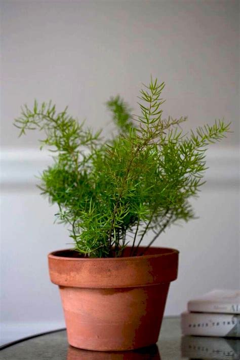 houseplant for low light best houseplants 9 indoor plants for low light gardenista