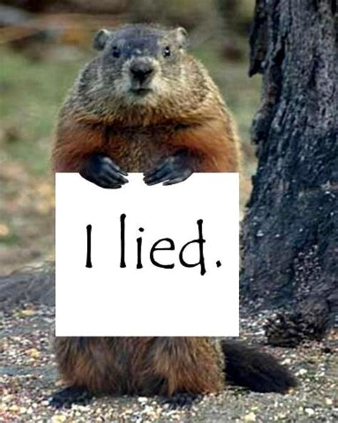 groundhog day i got you z winter groundhog i lied stop the lies groundhog you