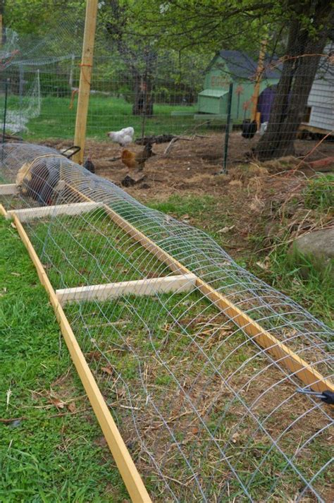 can you have chickens in your backyard how to build a diy backyard chicken tunnel