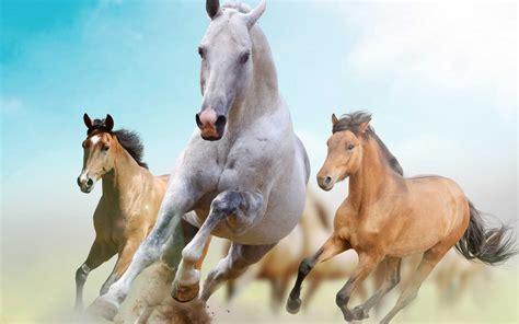 wallpaper iphone 6 horse beautiful horses wallpaper find tall and beautiful