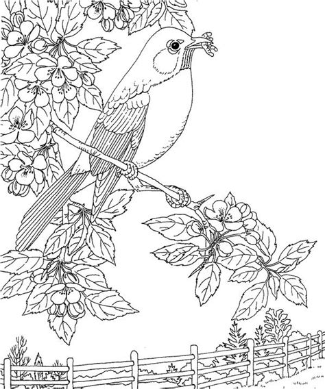 coloring page of a robin bird free coloring pages of robin birds